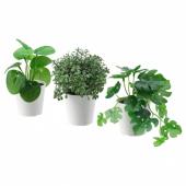 ФЕЙКА Искусственное растение в горшке,3шт, д/дома/улицы зеленый, 6 см